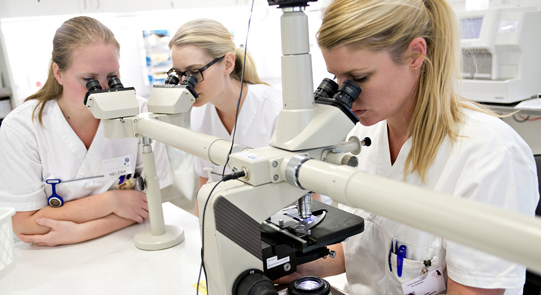 Researchers looking through microscope